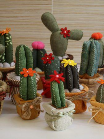 Morbidi Cactus