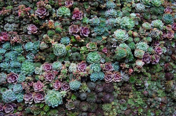 Giardino verticale piante grasse passion diy - Piante per giardino verticale ...