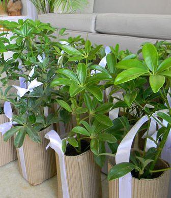 Regalo Eco Friendly