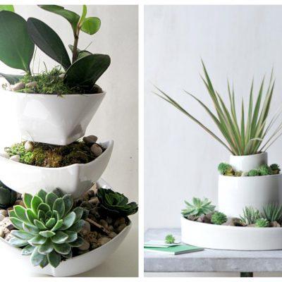 Composizione piante grasse passion diy - Composizione piante grasse da interno ...
