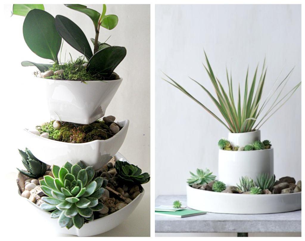 Composizione piante grasse passion diy - Piante da bagno ...