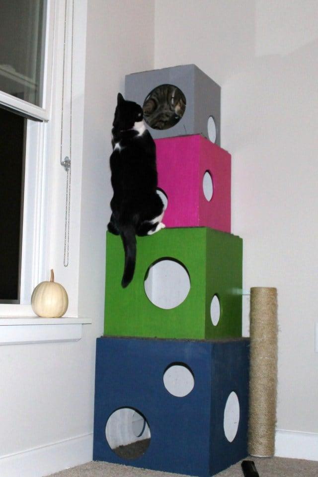 Accessori gatto fai da te passion diy - Accessori bagno fai da te ...