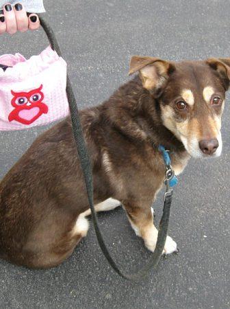 Borsa per cani da passeggio