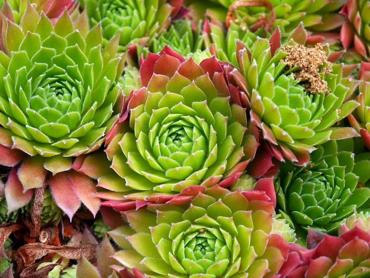 Come curare le piante grasse passion diy for Curare le piante