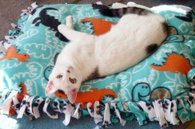 Cuccia imbottita per cani e gatti