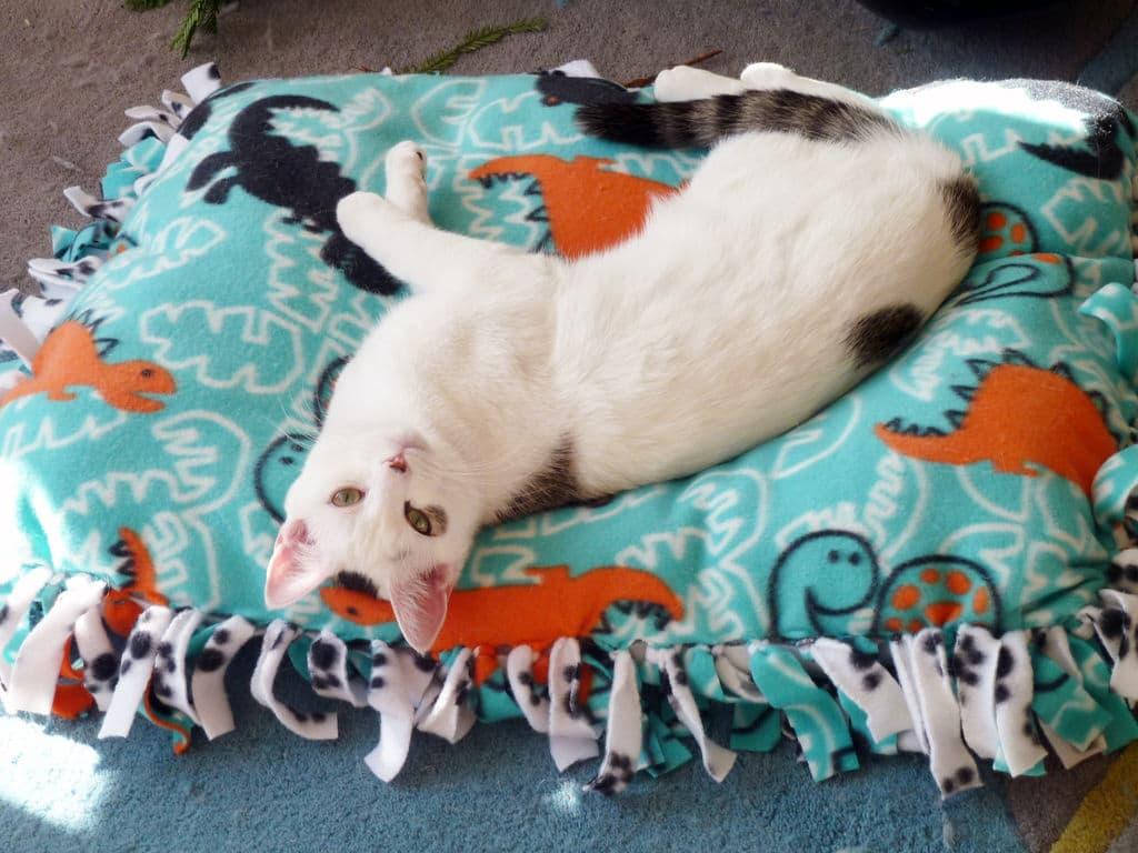 Cuccia imbottita per cani e gatti passion diy - Cuccia per gatti ikea ...