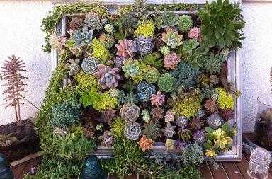 Composizione verticale di piante grasse