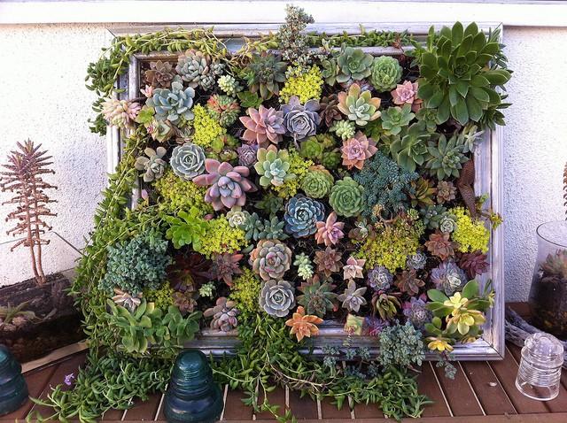Composizione verticale di piante grasse passion diy - Composizione giardino ...