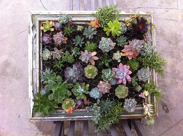 Composizione verticale di piante grasse - Passion DIY