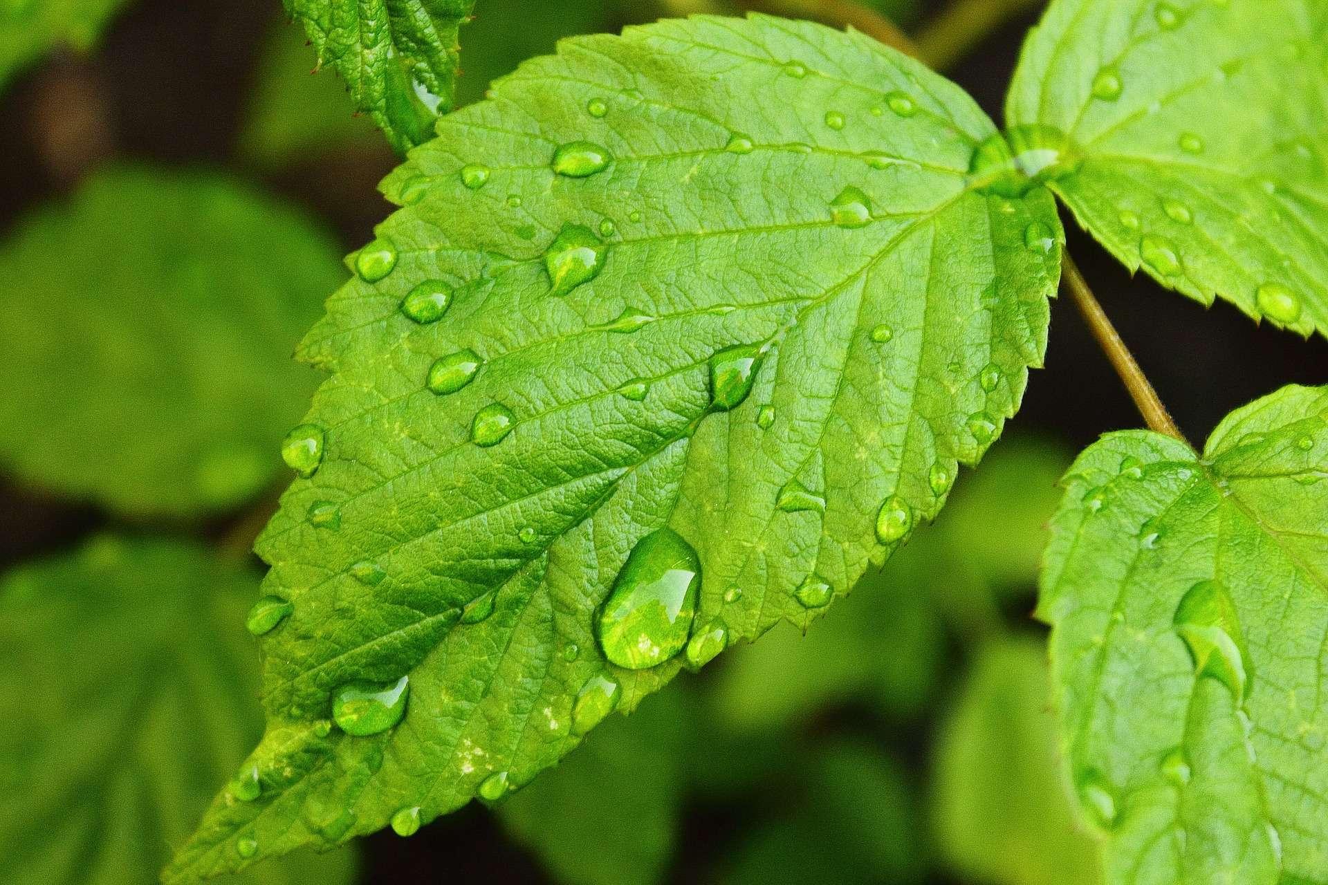 Come realizzare un sistema di irrigazione passion diy for Sistema irrigazione a goccia